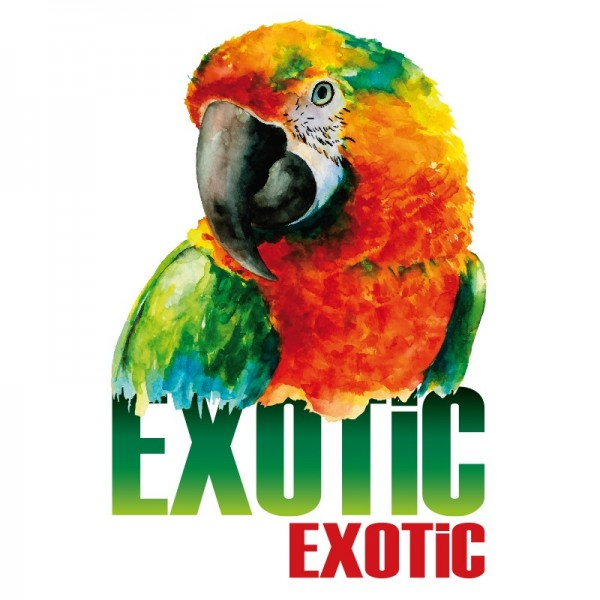 Color Bügeltransfers, DIN A4, Exotic
