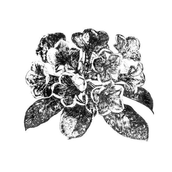Stempel, Blumen-Motiv 3, 6,5cm x 7,5cm
