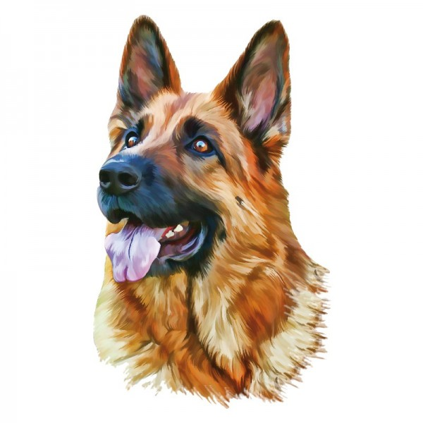 Color Bügeltransfers, DIN A4, Schäferhund Portrait