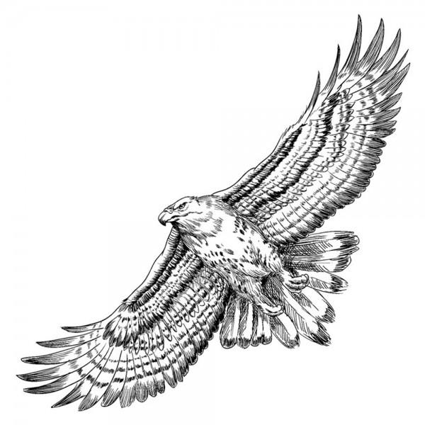 Feinkontur-Stempel, 15 x 15 cm, Adler