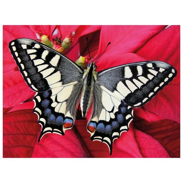 5D Diamond Painting, Schmetterling, 35cm x 25cm, Motivleinwand, runde Steinchen, inkl. Werkzeug