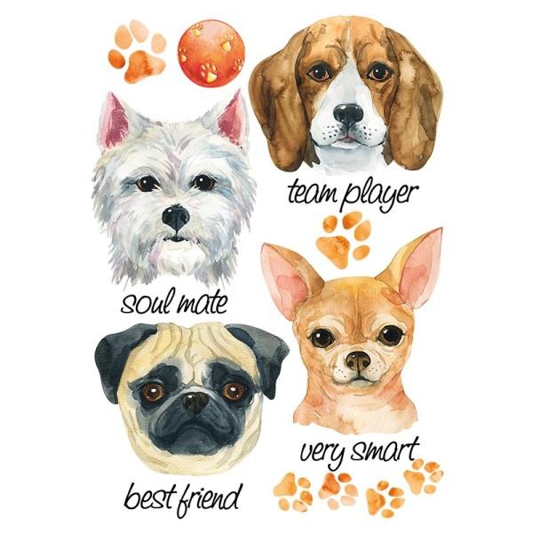 Color Bügeltransfers, DIN A4, Hunde 1